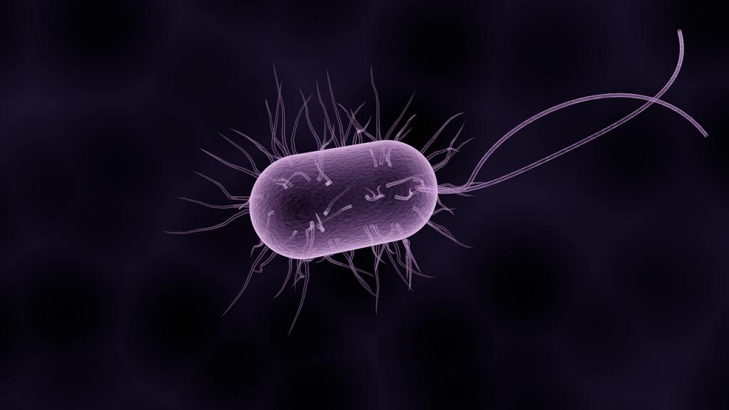 bacteria-1832824_1280