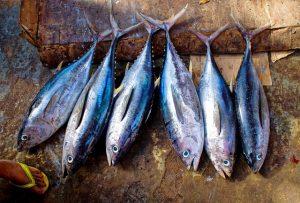 tuna-fish-954073_640