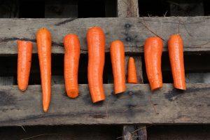 orange-1965920_640