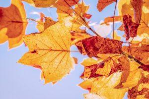 autumn-3763897_640